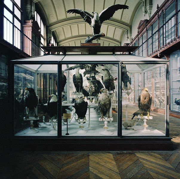 Museum National D'Histoire Naturelle | Paris, France 1982 - Richard Ross