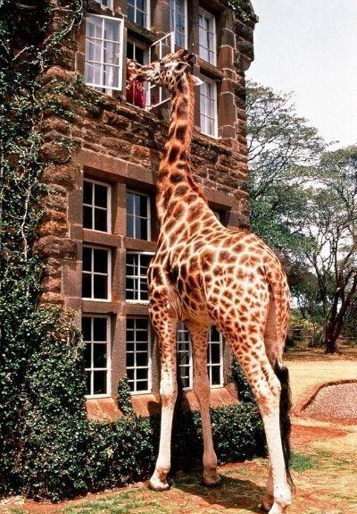Best hotel ever! Giraffe Manor in Nairobi, Kenya @Christina Childress & Bayer