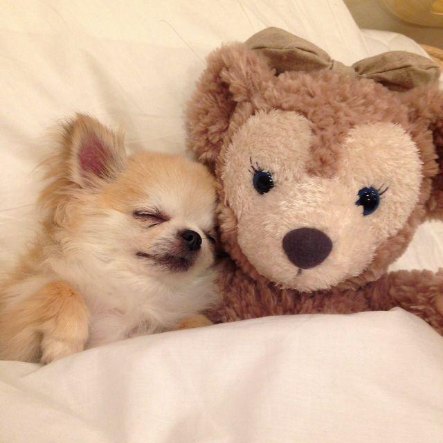 Sweet little doggie