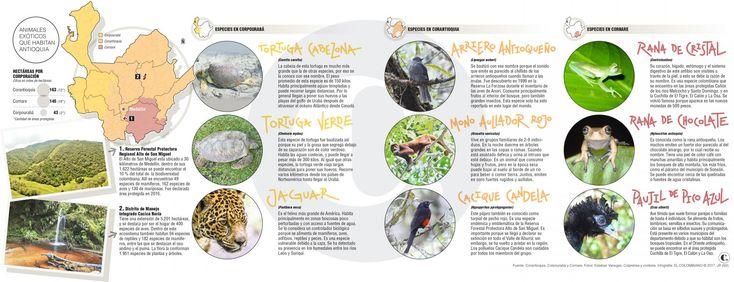 Plantas y animales fantásticos: dónde encontrarlos en Antioquia