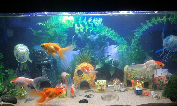 10 best images about spongebob aquarium on pinterest for Spongebob fish tank