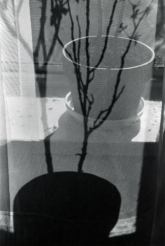 Andre Kertesz, 1963, Screen and Pot Shadow