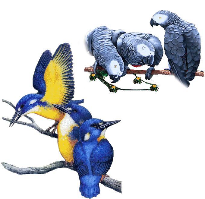Gify - ptáci vše « Rubrika   OBRÁZKY PRO VÁS