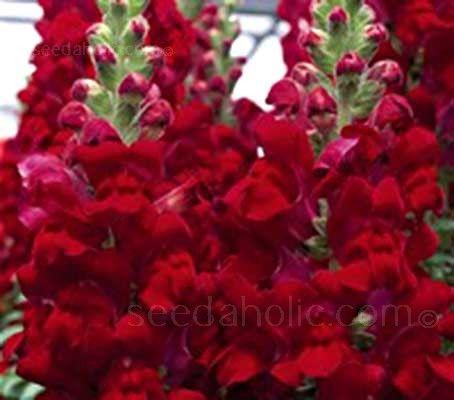 best ✿ flowers  perennials sun images on, Natural flower