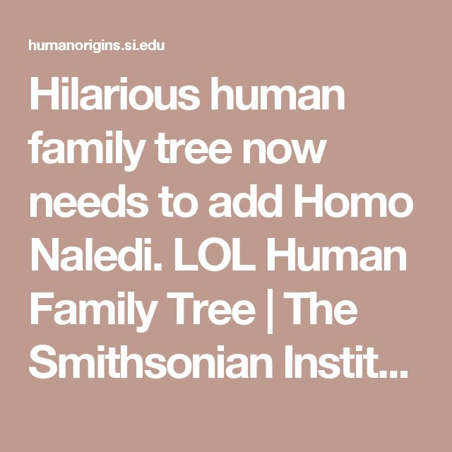 Hilarious human family tree now needs to add Homo Naledi. LOL Human Family Tree | The Smithsonian Institution's Human Origins Program