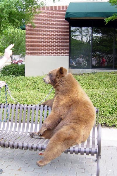 Oh you know, just being a bear, hanging out on #Baylor's campus. #SicEm