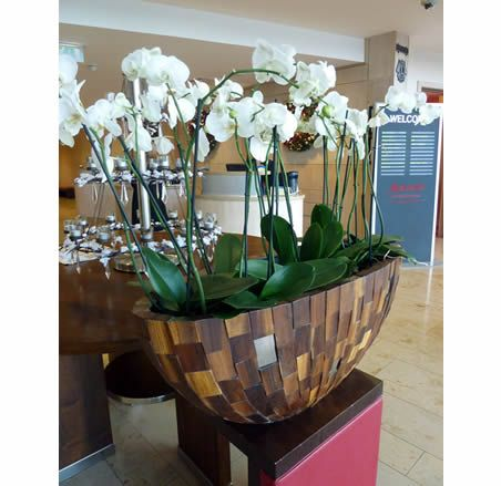 Orchid Designs  Live Plants for Offices 7 best images on Pinterest plants