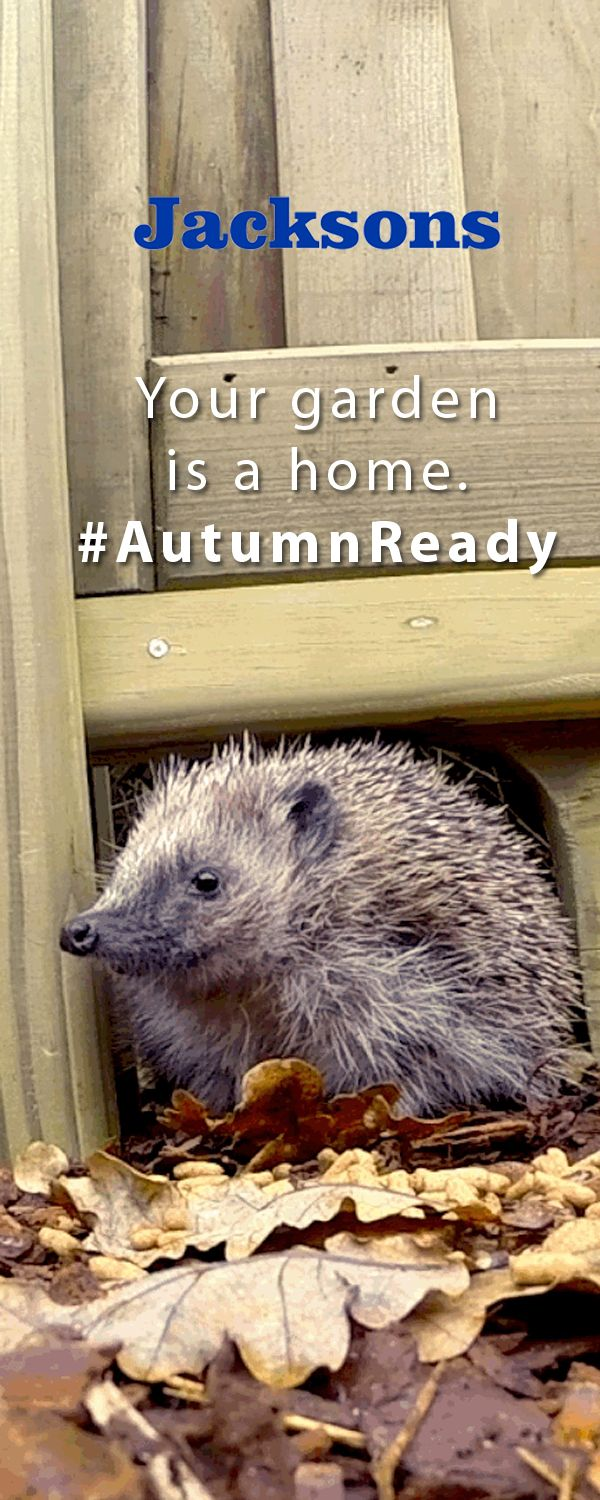 Make your garden a safe haven for all it's visitors this autumn. #AutumnReady