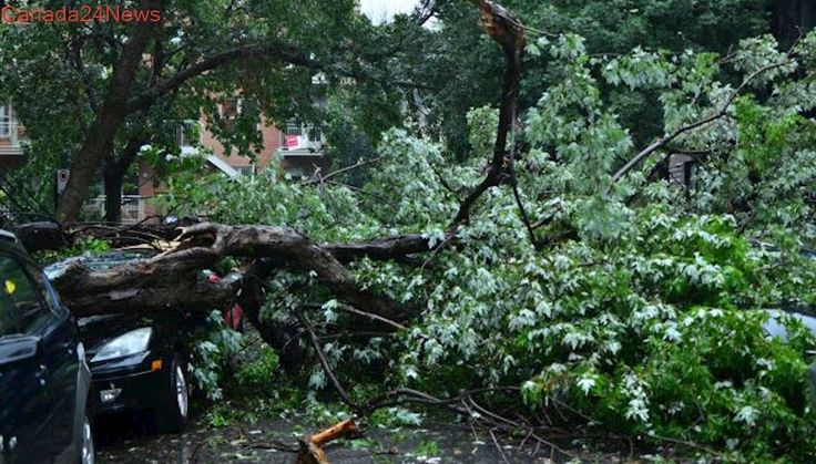 Clean-up underway after severe storm, heavy winds rip through Montreal