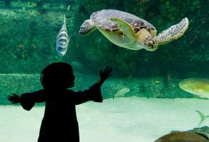 Check out this Emerald Isle, NC 5-Day Family #Vacation Itinerary! So many fun things to do!