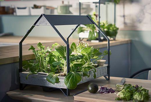 Deze kiembak helpt je bij het ontkiemen van zaden en allerlei planten in huis.