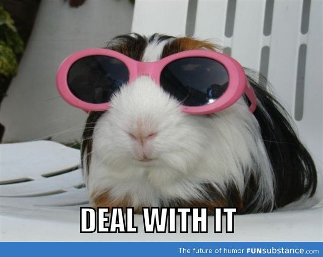 I think I like guinea pigs too much. Impossible!!!!