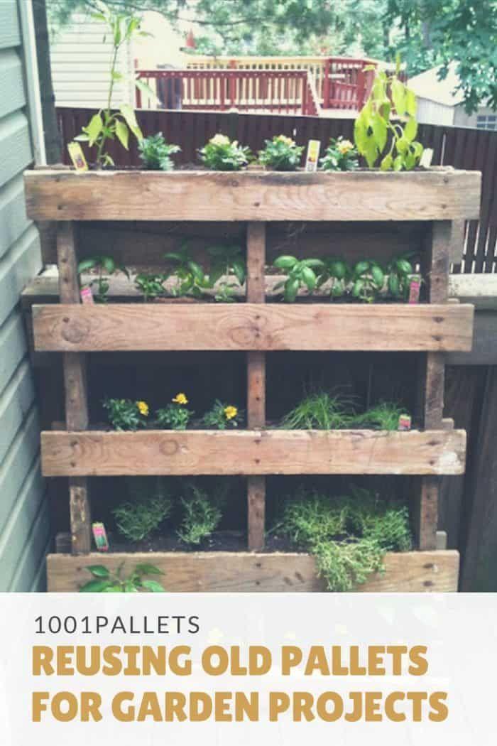 Reusing Old Pallets For Garden Projects Vertical Pallet Garden