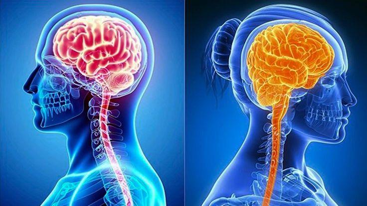 La depresión severa presenta un aspecto diferente en los cerebros de hombres y mujeres y este dimorfismo podría tener bases genéticas, según un estudio...