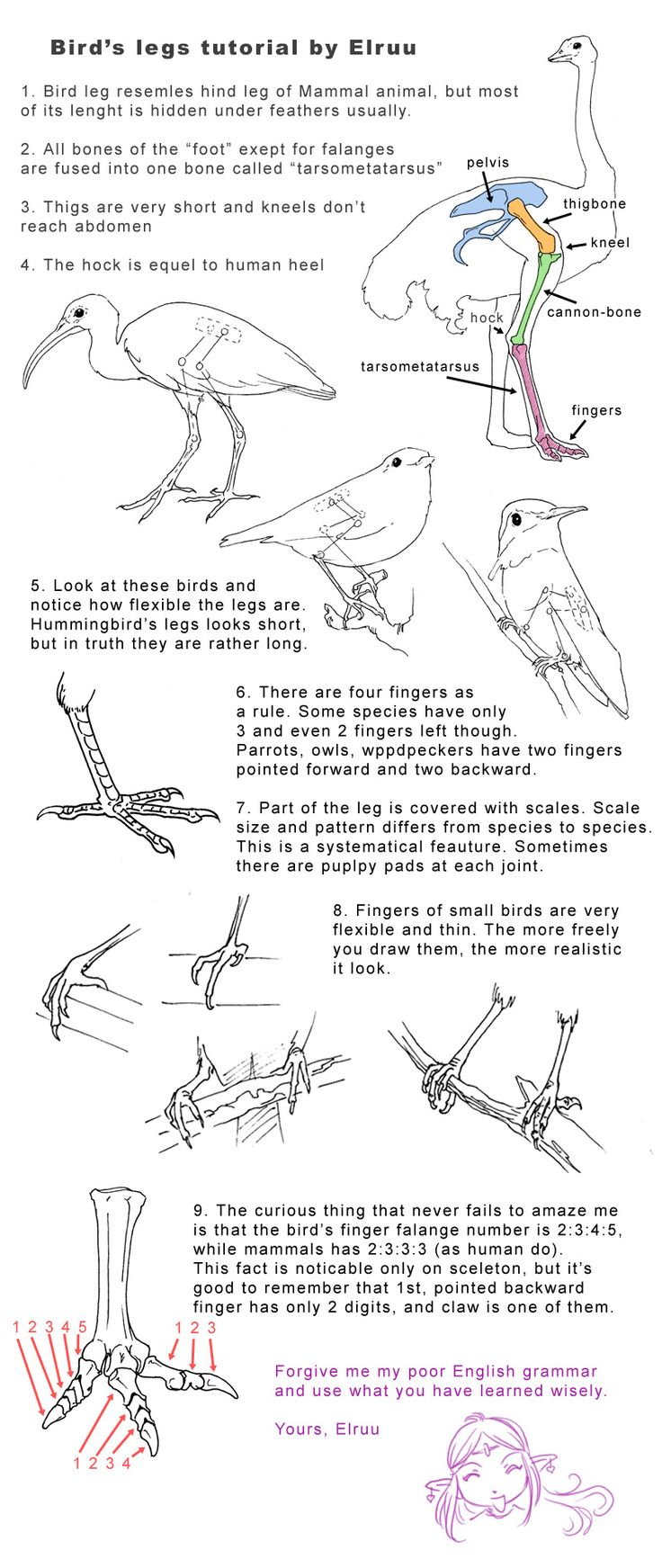 Bird legs tutorial by Elruu.deviantart.com on @deviantART   ★    CHARACTER DESIGN REFERENCES (www.facebook.com/CharacterDesignReferences & pinterest.com/characterdesigh) • Love Character Design? Join the Character Design Challenge (link→ www.facebook.com/groups/CharacterDesignChallenge) Share your unique vision of a theme every month, promote your art and make new friends in a community of over 25.000 artists!    ★