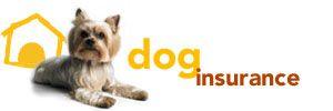 Petplan Pet Insurance - The Best Pet Health Insurance ...