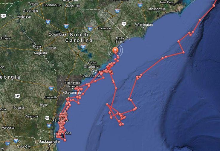 the great white shark , May Lee | Carolina Beach Today: Is Mary Lee, the 16' Great White Shark, Headed ...