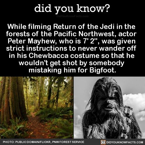 "While filming Return of the Jedi in the forests of the Pacific Northwest, actor Peter Mayhew, who is 7' 2"", was given strict instructions to never wander off in his Chewbacca costume so that he wouldn't get shot by somebody mistaking him for Bigfoot...."