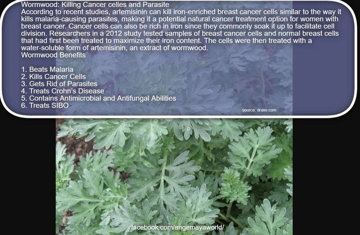 #Wormwood: Killing #Cancer cells and Parasite According to recent studies, artemisinin can kill iron-enriched breast cancer cells similar to the way it kills malaria-causing parasites, making it a potential natural cancer treatment option for women with breast cancer. Cancer cells can also be rich in iron since they commonly soak it up to facilitate cell division. Researchers in a 2012 study tested samples of breast cancer cells and normal breast cells that had first been treated to maximize…