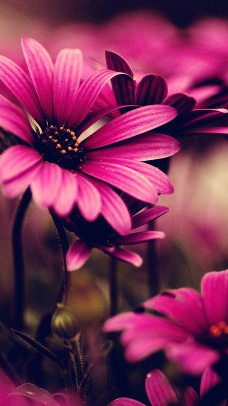 1080x1920 Flowers Iphone Wallpaper Hintergrundbilder