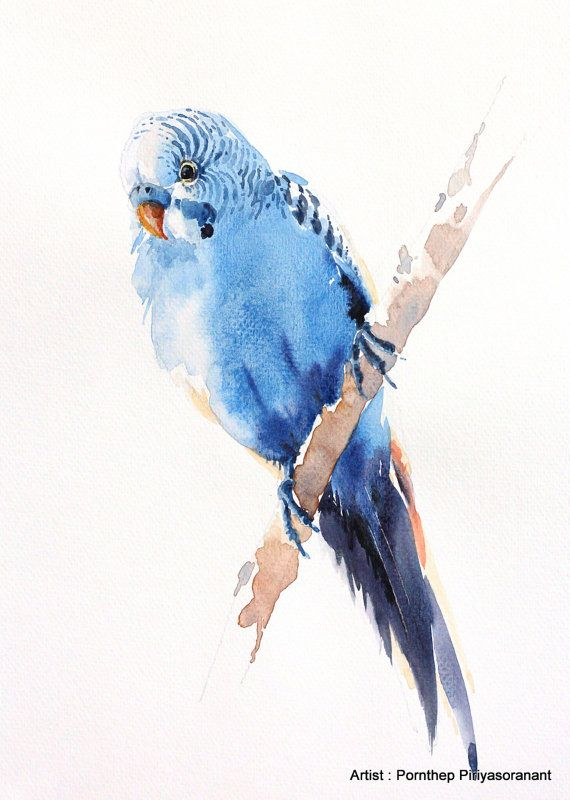 Periquito pájaro pintura acuarela de pájaro por OrientalArt2029