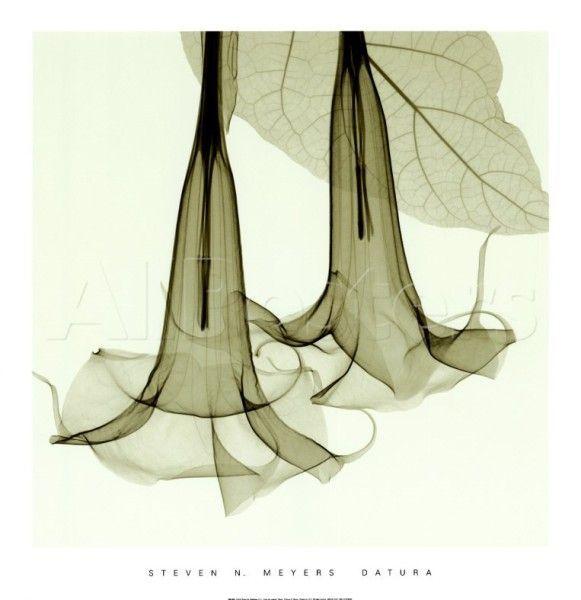 Radiografías de flores y plantas de Steven N. Meyers