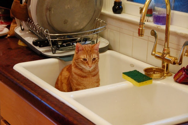 Cats In Sinks ~ The Ark In Space