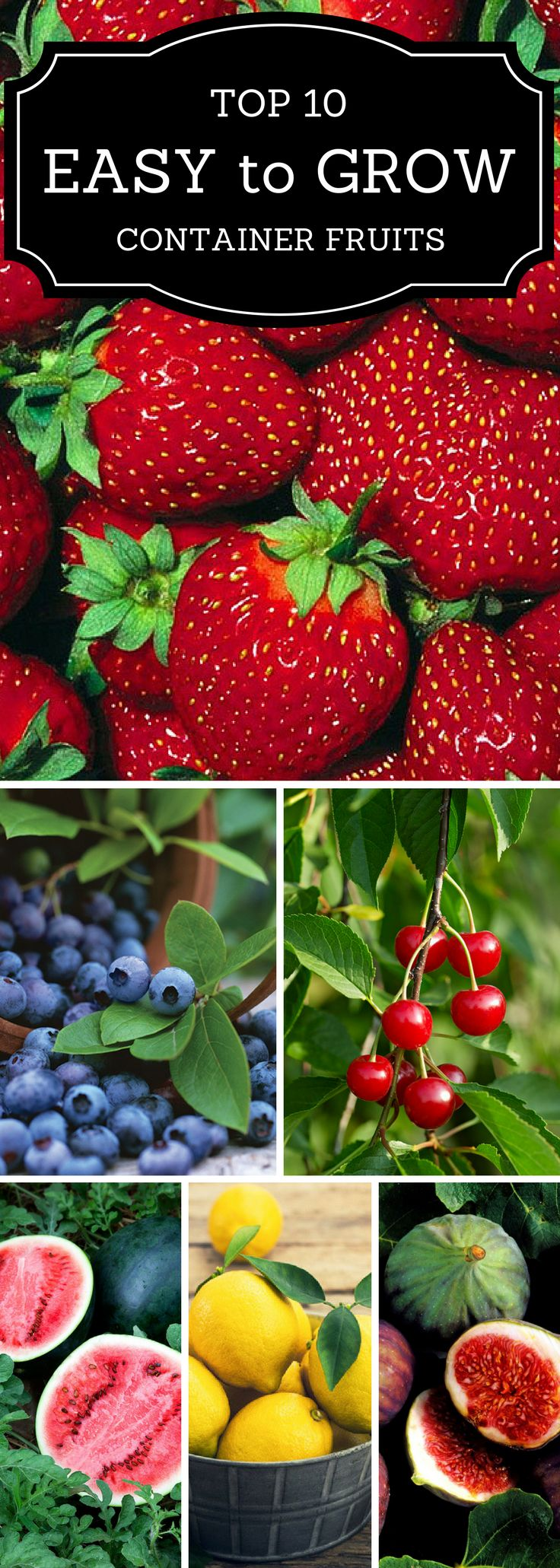 10 Easy to grow fruits in containers