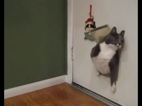 The best collection of Cats Video Compilation - https://www.youtube.com/channel/UCpsOnKmju_3D2HWGWi9Gejg