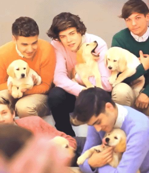 Gif Harry Puppy: OHHHH MYYYY GOOSHHHH!! Zayn Puppy: ah, darn!! Missed da kiss.. Niall Puppy: Oh, Zayn.. You smell soooo good! Louis Puppy: LOUIS... I.. Am uncomfortable, and I can't hardly breathe... Liam Puppy: OMG. You are holding me perfect. I'm so comfortable... Never let me goooo....