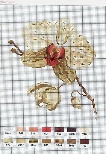 Mango Pratique '' Flower Variations ''
