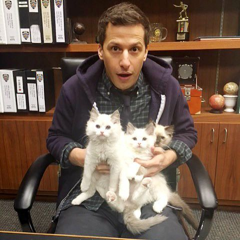 andy samberg - almost famous cats