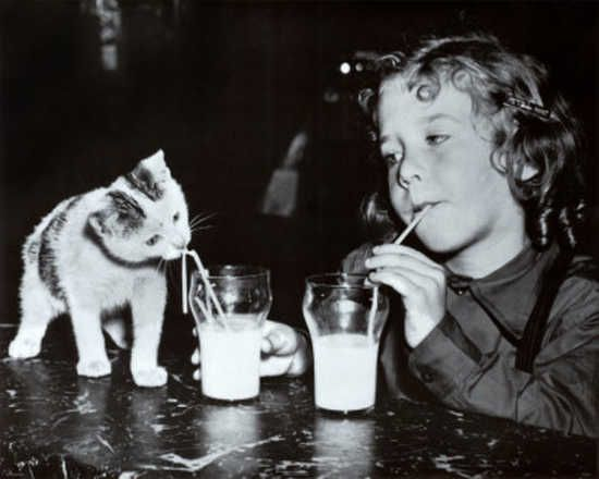 Girl and kitten drinking milk.  I think I need to train my kitty to do this!