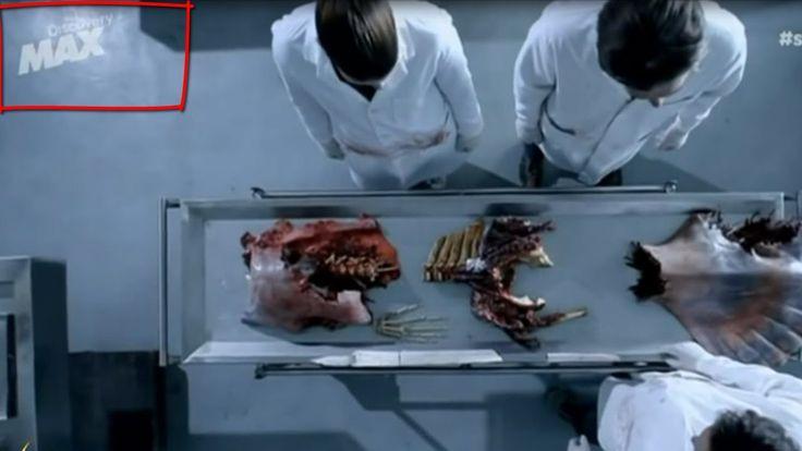 Pruebas Científicas De Que Existen Las Sirenas (Discovery Channel) - Doc...