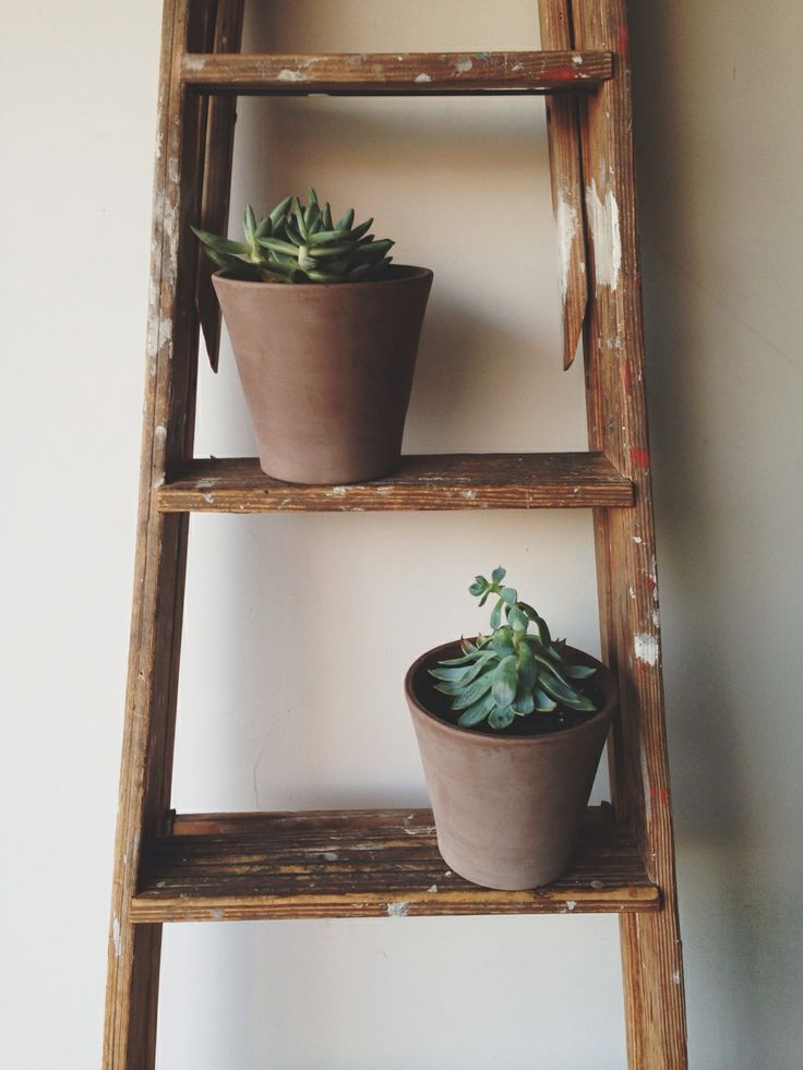 Great use of an old ladder i plan to use my old ladder as a trellis for beans and squash - Ladder plant stand plans ...