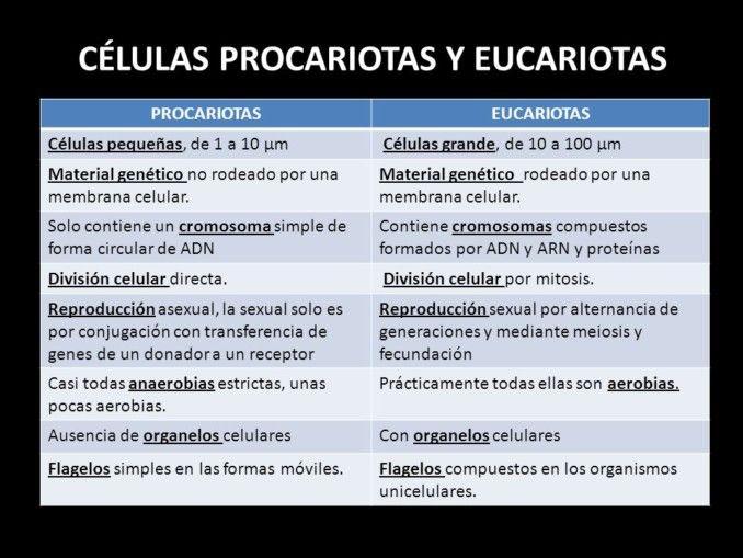 Cuadros Comparativos Diferencias Entre Células Procariotas Y Eucariotas Cuadro Com Celula Procariota Y Eucariota Células Procariotas Procariota Y Eucariota