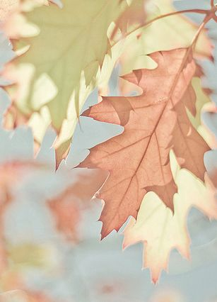 Un automne pastel...
