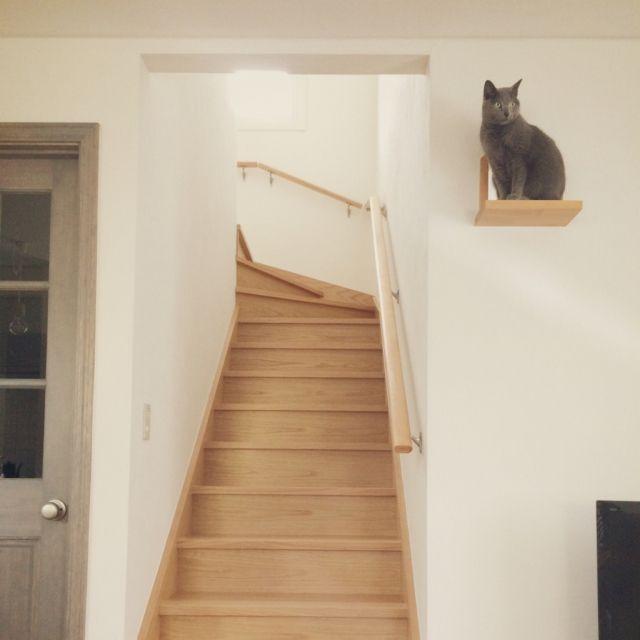 apiさんの、ロシアンブルー,猫のいる暮らし,塗り壁,新築,北欧,ナチュラル,リビングイン階段,キャットウォーク,リビング,のお部屋写真