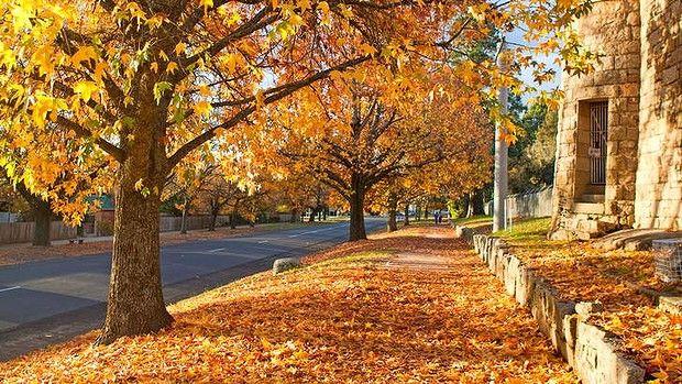 Autumn colours, Beechworth, Victoria,Australia.