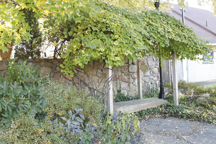 This grape arbor is just behind the Pottery House Cafe and Grille.  What a wonderful hidden place for a peaceful moment!