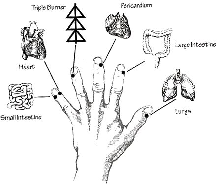 Great picture of the six organ meridian end points.  By massaging or tapping on these end points you are working with half of the healing channels of your body.  If you can not tap on the usual points (like your in a meeting) try twisting the end of your fingers at these points while you think about the issue you would like to losen from your thoughts.
