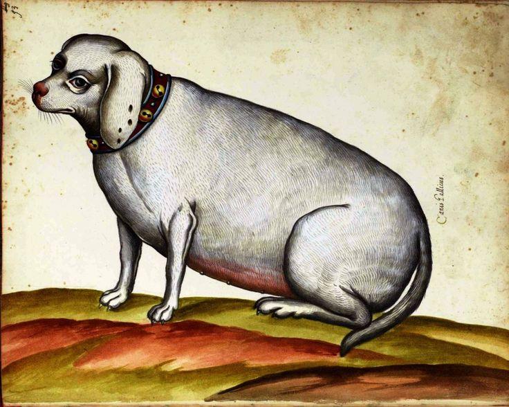 Animal - Dog, Older -  Italian -  (2)