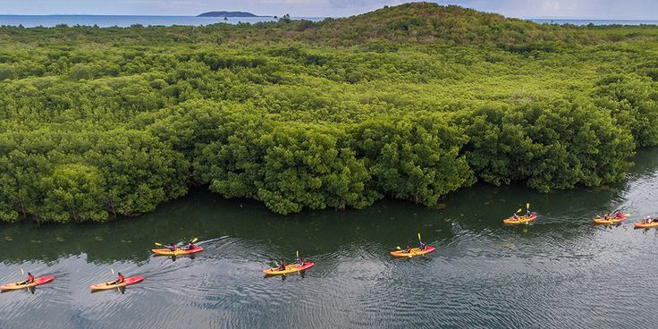 Join us in a Bio Bay Kayaking Tour Excursion where you'll experience the rare phenomenon of Bioluminescence at the Laguna Grande in Fajardo, Puerto Rico.