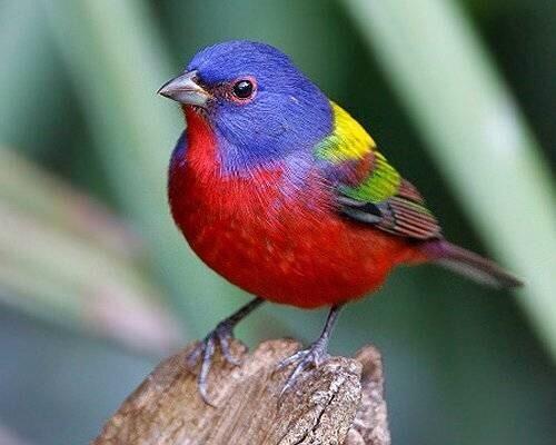Kleurrijke vogel