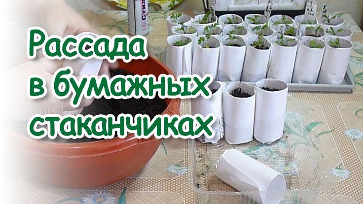 Любовь Зиброва. Рассада в бумажных стаканчиках и не только /Seedlings in...