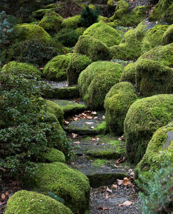 GARDEN PATH nature photography print by greyskyphotography on Etsy       Zen Garden Photography