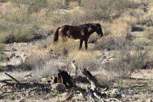 """Navajo Nation mulling horse hunt to curb wild population ! """"Navajo Nation mulling horse hunt to curb wild population"""" DETAYLAR İÇERDE https://www.oderece.net/navajo-nation-mulling-horse-hunt-to-curb-wild-population/"""