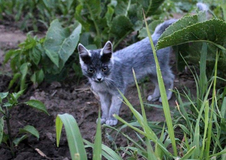 #throwbackthursday  Gandalf when he was just a little kitten 💙😻👶  #darkmaskedcats #gandalf #catoftheday