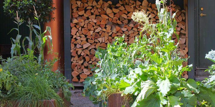 KØKKENHAVEN - KAOS OG KONTROL - Designing the veg. garden