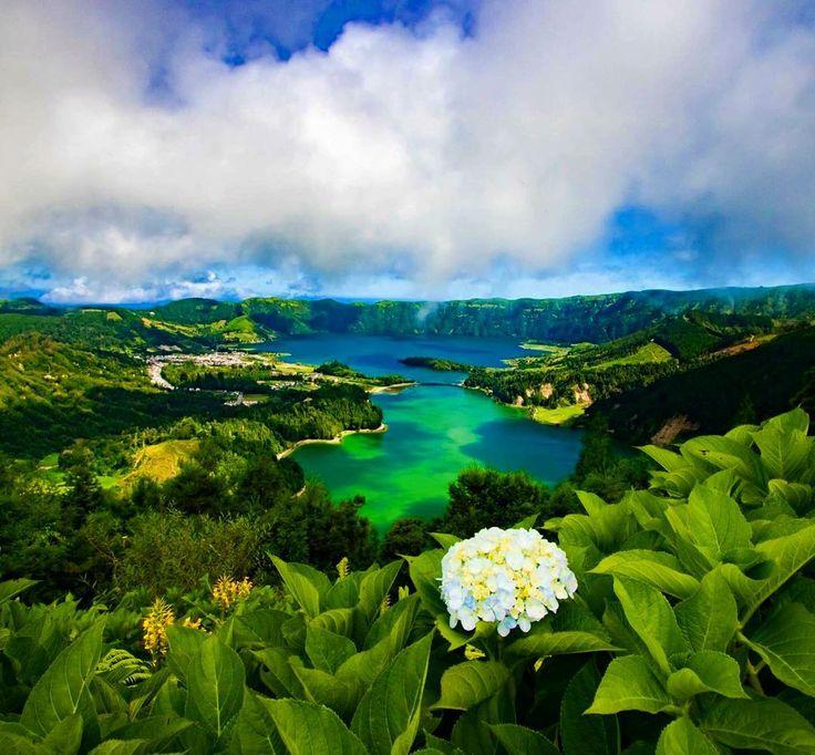 1000 id es sur le th me fleurs de hawaii sur pinterest - Faut il couper les fleurs fanees des hortensias ...